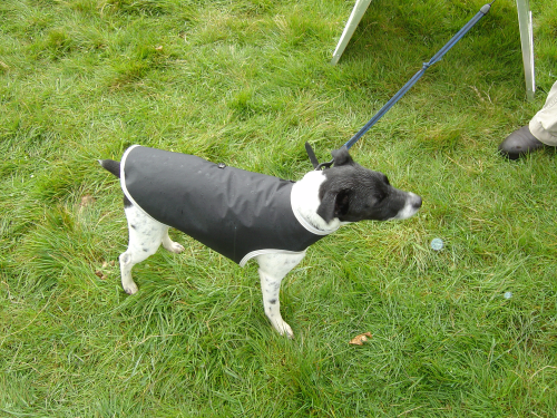 dog coat by bettysbeds 20inch